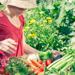 Planning Your Vegetable Garden